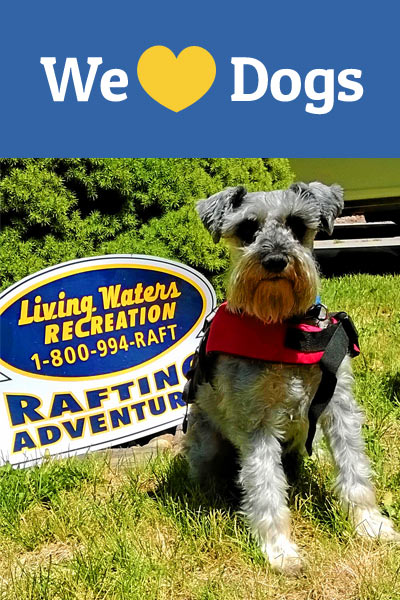 Bring your dog on a whitewater rafting trip
